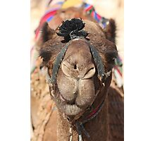 Close-up portrait of a camel, Negev, Israel Photographic Print