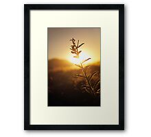 Prickly Sunset Framed Print