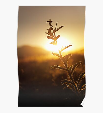 Prickly Sunset Poster