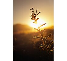 Prickly Sunset Photographic Print