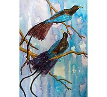 Birds of Paradise in Blue Photographic Print