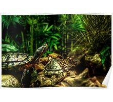 Turtles Poster