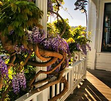 The Front Porch by Barbara  Brown