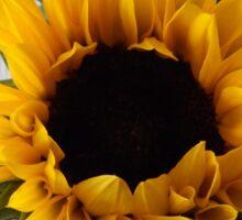 Sunflower head Sticker