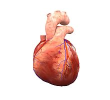 Awesome Real Heart Photographic Print