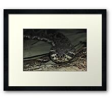 Feeling Rattled Framed Print