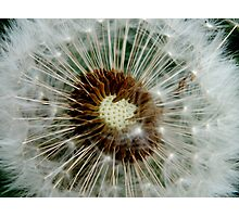 You think of your wish as you blow off the fluff. Photographic Print
