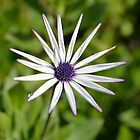 Macro Flower by PaperRosePhoto