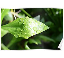 Leaf with Morning Dew Poster