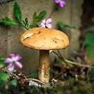 Wonderland mushroom by Matthew Bonnington