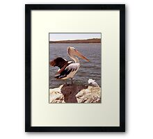 Pelican and Seagull  Framed Print