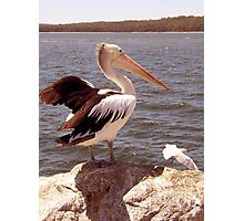 Pelican and Seagull  Photographic Print