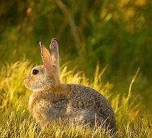 Bunnies And Bokeh by John  De Bord Photography