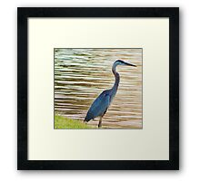 Blue Hering 11 Framed Print