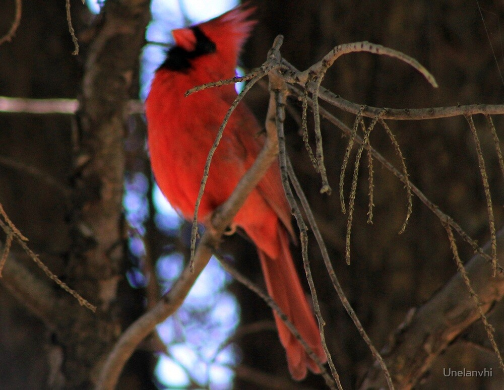 Lonely Red Bird  by Unelanvhi