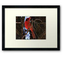 Lonely Red Bird  Framed Print