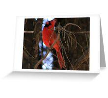 Lonely Red Bird  Greeting Card