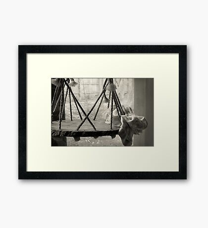 Artist's Window Framed Print