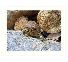 Camouflage Turtle  Art Print