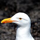 Seagull II by ZWC Photography