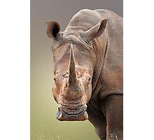 White Rhinoceros portrait Photographic Print