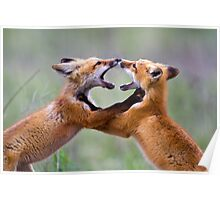 Fox kits at play Poster