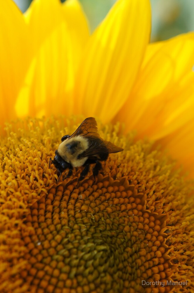 Sunflower Days by Dorothy Manuel