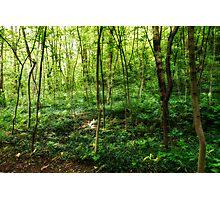 Woodscape #6 Photographic Print