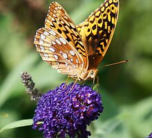 Butterfly Bush by Dorothy Manuel