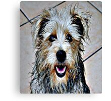 Colorful Dog Canvas Print