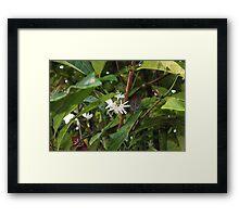 A precious spice tree Framed Print