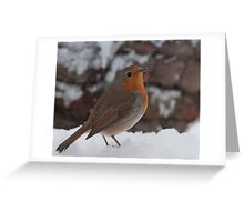 Snow Robin. Greeting Card