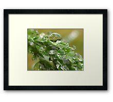 grass seeds Framed Print