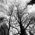 Trees by SunDwn
