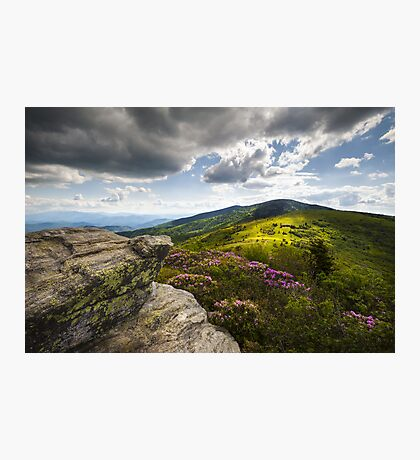 Roan Mountain Rhododendron Bloom - A Glorious Greeting Photographic Print