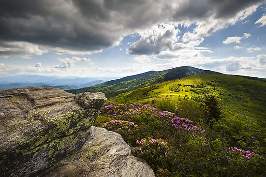 Roan Mountain Rhododendron Bloom - A Glorious Greeting by Dave Allen