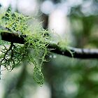 entwined in green by natalie angus