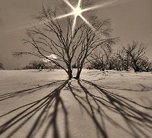 Burnt snowgums near Mount Cobbler by Kevin McGennan