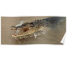 Saltwater Crocodile Ready And Willing Poster