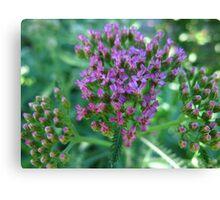Purple freckles Canvas Print