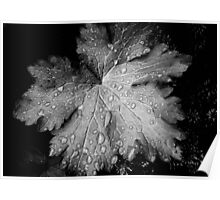 Leaf with raindrops, a black and white study Poster