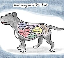 Anatomy of a Pit Bull by MommySketchpad