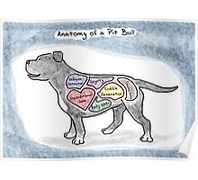 Anatomy of a Pit Bull Poster