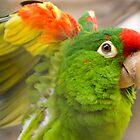 Beautiful Birdy by Guatemwc