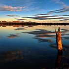 Moulting Reflections  by Kip Nunn
