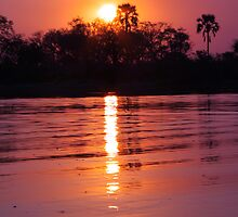 Okavango in Pink by Jennifer Sumpton