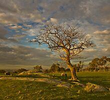 magic tree by ketut suwitra