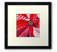Christmas Red Poinsettia  Framed Print
