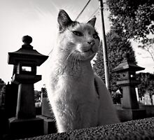 Yanaka Cemetery Cat - Japan by Norman Repacholi