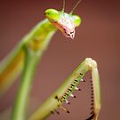 Praying Mantis by Dean Mullin